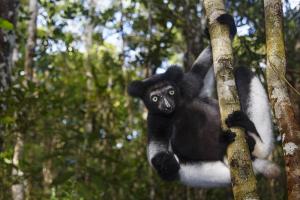 Madagascar (Expedição Fotográfica) @ Madagáscar   Madagáscar