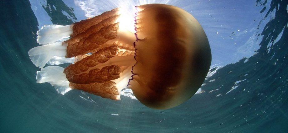 Foto: Dan Abbott/Wild Ocean Week/Instagram/Reprodução)