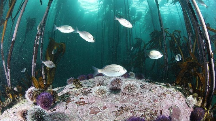 Imagem: Divulgação/Cape Town Dive Centre